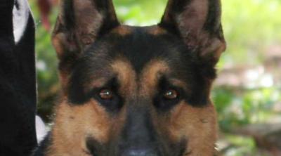 Hondenbrigade Rotterdam voor evenementbeveiliging